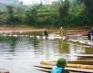 """Phát hiện hàng chục khối gỗ quý """"vô chủ"""" bên bờ sông"""