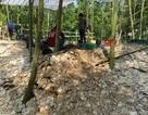 Phát hiện nhiều vỏ điệp trong hố khai quật 3 bộ xương người Việt cổ
