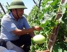 """Kỳ lạ rau xanh, cây trái mỡ màng giữa """"sa mạc cát"""" nóng 60 độ C"""