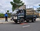 Xử lý gần 1.200 trường hợp vi phạm chở hàng quá tải