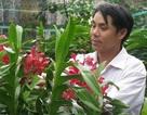 Kiếm lãi 100 triệu mỗi tháng nhờ trồng phong lan