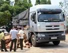Bắt giữ xe tải chở gỗ lậu ngụy trang xe của báo chí