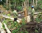Bắt 10 đối tượng mang theo hung khí đi phá rừng