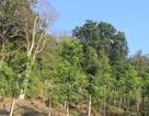 Ủy ban kiểm tra vào cuộc vụ đề xuất cấp sổ đỏ hàng chục héc ta rừng cho cán bộ