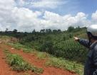 Chủ tịch tỉnh yêu cầu cán bộ giải trình việc sử dụng đất rừng