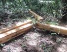 Bắt giữ 3 đối tượng phá rừng tại khu bảo tồn thiên nhiên