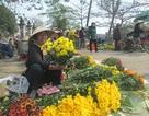 Hoa cúc Tết nở muộn, dân cắt đi bán rằm để bù lỗ