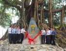Cây đa 300 tuổi thành cây Di sản thứ 3 tại Huế