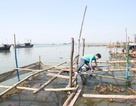 Chuyên gia nước ngoài đến Thừa Thiên Huế lấy mẫu tảo lạ