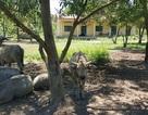 Trường cho trẻ em vùng khó khăn xây xong rồi… bỏ hoang