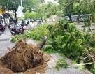 Cây đổ la liệt sau bão số 4, mưa ngập nhiều nơi