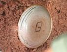 Đào được 1 dĩa cổ nguyên vẹn có viền màu vàng