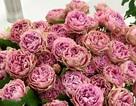 Quà tặng 8/3: Đại gia Việt chơi sang, chi trăm triệu mua hoa hồng tặng vợ