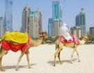 Đại gia UAE bỏ ngỏ khả năng đầu tư Casino tại Việt Nam