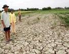 Biến đổi khí hậu là cơ hội cho ngành nông nghiệp cải cách