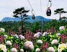 Đưa Lâm Đồng thành vựa rau, hoa và điểm du lịch xanh số 1 ASEAN