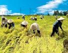 Xuất khẩu nông sản 2016: Rau quả vui đẩy nỗi buồn cho gạo