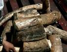 Phát hiện thêm 1 tấn ngà voi ngụy trang tinh vi trong lô gỗ rỗng ruột