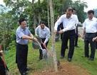 Phó Thủ tướng Vũ Văn Ninh trồng cây lưu niệm tại Khu di tích Pác Bó