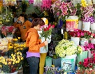 Cần Thơ: Thị trường hoa tươi cho ngày 8/3 bắt đầu tăng giá