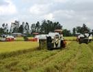 Sao nông dân trồng lúa mãi nghèo?
