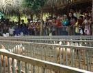 Cần Thơ: Về Làng du lịch Mỹ Khánh chơi trò miệt vườn