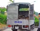 """Vi phạm giao thông, xe tải """"lòi"""" ra hơn 1 tấn da bò thối"""