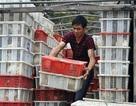 Hà Nội: Bắt giữ xe tải chở 4.000 con chim bồ câu Trung Quốc nghi lậu