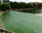 """Hà Nội: Dân khốn khổ vì hồ Văn Quán bị """"bức tử"""""""