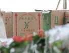 """""""Hoa lạ"""" trồng bên hồ Hoàn Kiếm có nguồn gốc từ Trung Quốc?"""