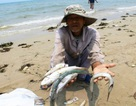 Formosa chuyển nốt 250 triệu USD bồi thường vụ cá chết vào ngày 28/8