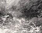 Một người tử vong khi đi săn thú rừng