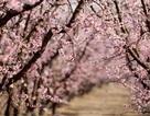 Tản mạn mùa xuân