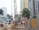 Hà Nội trồng mới cây xanh: Nhà tài trợ chỉ góp tiền, không biết cây thay thế là cây gì!