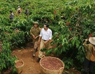 Cà phê Trung Quốc bít đường cà phê Việt?