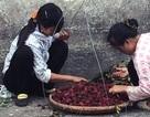 Thanh mai Trung Quốc 8 ngàn/kg, lừa dân Hà thành 200 ngàn/kg