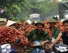 Giải cứu nông sản: Thí điểm cơ chế thúc đẩy qua Trung Quốc?