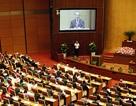 Đại biểu Quốc hội Trà Vinh xin từ nhiệm