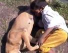 Bé trai 6 tuổi bú chó để giải tỏa cơn đói