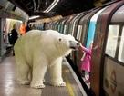 Gấu bắc cực khổng lồ lang thang trên đường phố London