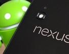 Google sẽ ra mắt 2 smartphone Nexus trong năm nay?