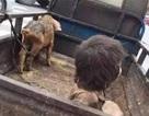 Xót thương cậu bé 7 tuổi phải sống nhiều năm trong chuồng lợn