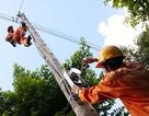 Khởi động thị trường phát điện cạnh tranh
