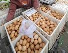 """Trung Quốc: Điều tra trứng luộc """"nảy"""" như bóng"""