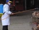 Không có bằng chứng vi-rút cúm A/H7N9 có thể gây đại dịch