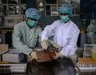 Hồng Kông xác nhận trường hợp thứ hai nhiễm cúm gia cầm H7N9