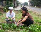 Tỉ lệ suy dinh dưỡng giảm bền vững tại nhiều tỉnh thành