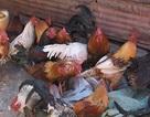 Đóng cửa các chợ gia cầm sống - Cách tốt nhất ngăn cúm H7N9