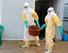 Vùng dịch Ebola: Người dân có nguy cơ chết đói