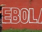 Khu vực có nguy cơ nhiễm Ebola từ động vật lớn hơn mọi dự đoán